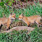 Fox Kits 11 by Michael Cummings