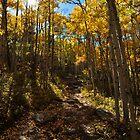 Fall Aspen Trail by Reese Ferrier