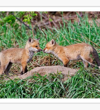 Fox Kits 11 Sticker