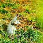 squirrel through the trees by xxnatbxx