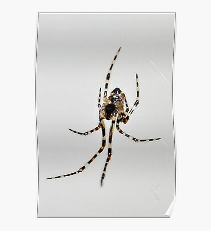 Creepy Crawly Poster