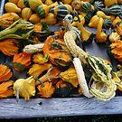Gnarly harvest by nealbarnett