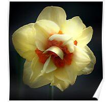 daffodil enhanced Poster