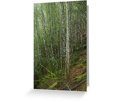 The beauty of the rainforest Greeting Card