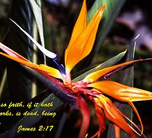 Bird of Paradise - James 2:17 by hexhead