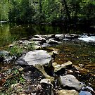 The Holler by SamTheCowdog