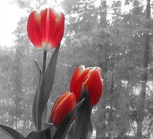 Bright tulips by kizkizi5003