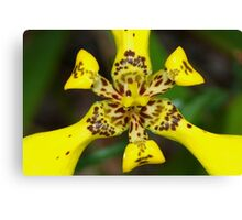 Explosion in yellow Canvas Print