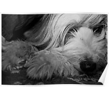 Let sleeping dogs lie... Poster