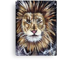 Big Cat Series Lion  Canvas Print