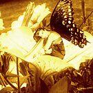 Golden Dawn Fairy by Tony Diana