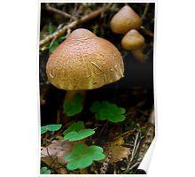 Fungi & Clover Poster