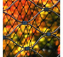 Caged autumn Photographic Print