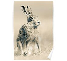 Portrait of a Hare Poster