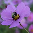 The Bee and the Poppy by Chelei