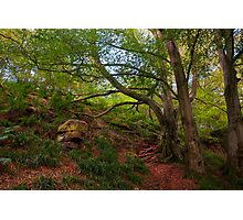 Northumberland woodland 3 Photographic Print
