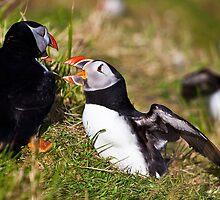 Get off my land!! by Shaun Whiteman