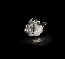 Lotus I by Muratano