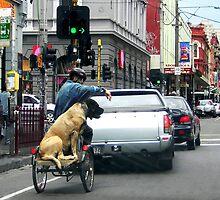 The Brunswick Street Dog by Roz McQuillan
