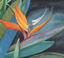 Bird of Paradise by Pamela Hirsch