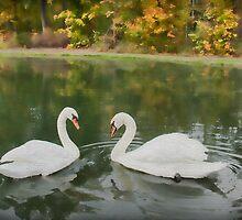 Swan Serenade by Marilyn Cornwell