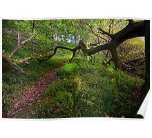 Northumberland Tree Poster