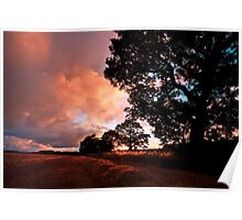 Northumberland Trees Poster
