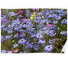 Pretty Blue Daisies Poster