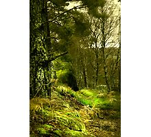 Northumberland Woodland Photographic Print
