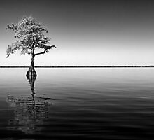 Alone, From the Blue Cypress Lake Experience by MKWhite