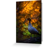 Duck at dusk Greeting Card