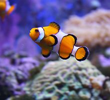 I Found Nemo by Chappy