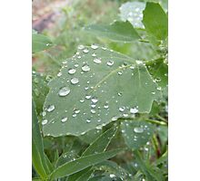 Droplets of Rain Photographic Print