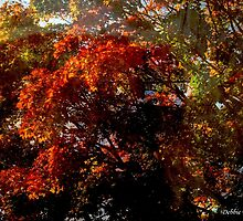 Fall Foliage for Fred by Debbie Robbins