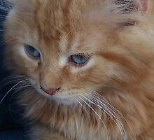 The precious kitten by Kimberly638