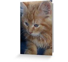 The precious kitten Greeting Card