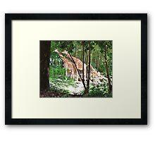 Giraffes at Riverbank Framed Print
