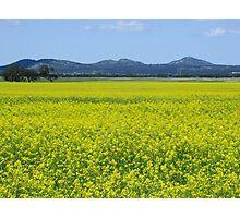 You Yangs and canola Photographic Print