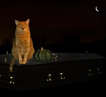 Halloween cat! by Odille Esmonde-Morgan