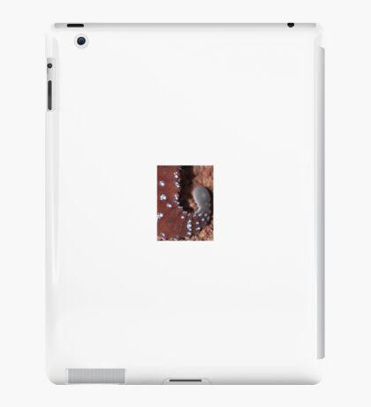 Knobtail Gecko - Nephrurus Levis Tail iPad Case/Skin