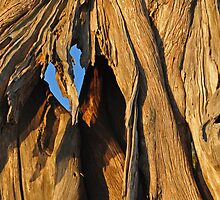 My tree bark by Michele Conner