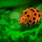 Lady Bug by Liza Yorkston