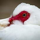 Goose by Liza Yorkston