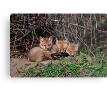 Fox Kits 8 Metal Print