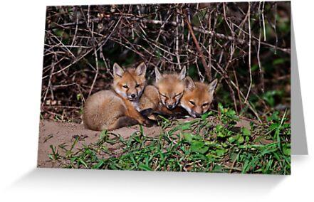Fox Kits 8 by Michael Cummings