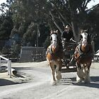 Miner In Horse & Cart - Sovereign Hill -Ballarat by judygal