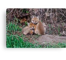 Fox Kit 7 Metal Print