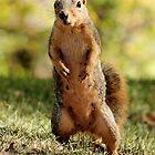 What! No More Nuts???? by Ann  Van Breemen