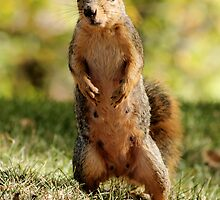What! No More Nuts???? by Ann  Van Breemen