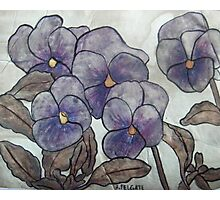 Pansies XII Photographic Print